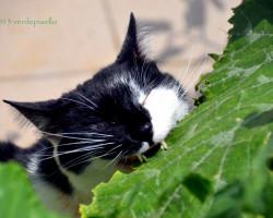 omar-mangiatore-di-zucchina